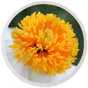 Frenzy Of Stamens Round Beach Towel