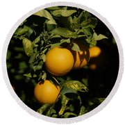 Fresh Oranges Round Beach Towel