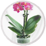 Fresh Pink Orchid In Pot Round Beach Towel
