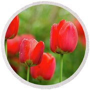 Fresh Spring Tulips Flowers With Water Drops In The Garden  Round Beach Towel