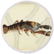 Fresh Water Crayfish Unsigned Sketches Attributed To William Buelow Gould Round Beach Towel