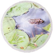 Frog And Lily Pads Round Beach Towel