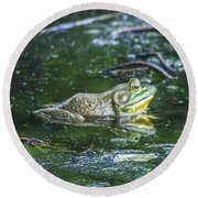 Frog In A Pond Round Beach Towel
