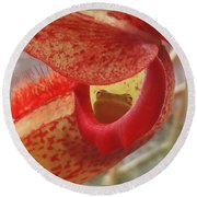 Frog In The Shade Round Beach Towel
