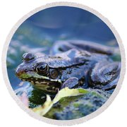 Frog In Water Round Beach Towel
