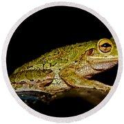 Cuban Tree Frog Round Beach Towel