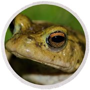 Frog Posing Round Beach Towel