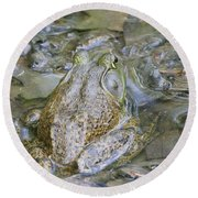 Frogs Eye View Round Beach Towel