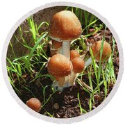 Front Pourch Mushroom Family Round Beach Towel