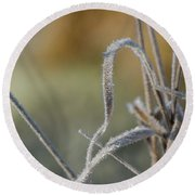Frost On The Stems Round Beach Towel