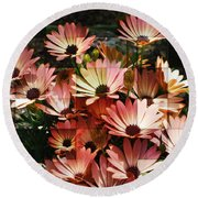 Frosted African Daisies Round Beach Towel