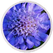 Frosted Blue Pincushion Flower Round Beach Towel