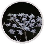 Frosted Hogweed Round Beach Towel