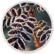 Frosty Rose Leaves Round Beach Towel