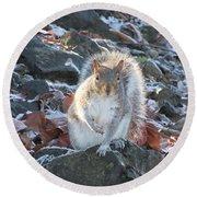 Frosty Squirrel Round Beach Towel