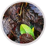 Frozen Oak Leaves, Glenveagh National Round Beach Towel