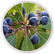Fruit And Leaves Of The Red Bay Round Beach Towel