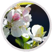 Fruit Tree Blossom Round Beach Towel