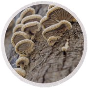 Fungui Growing On A Tree Trunk Round Beach Towel