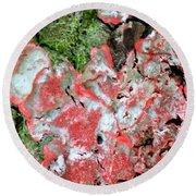 Fungus Amongst Us - Florida Palm Round Beach Towel