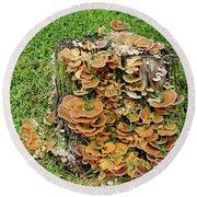 Fungus Bouquet Round Beach Towel