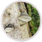 Fungus Grows On A Tree Trunk Round Beach Towel