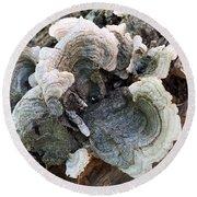 Fungus Round Beach Towel
