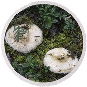 Fungi No 3 Round Beach Towel