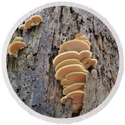 Fungus Round Beach Towel