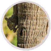 Funky Ear Squirrel Round Beach Towel
