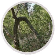 Funky Tree On Trail In Peters Canyon Round Beach Towel