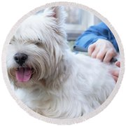 Funny View Of The Trimming Of West Highland White Terrier Dog Round Beach Towel