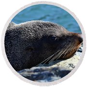 Fur Seal Round Beach Towel