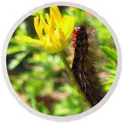 Furry Caterpillar On A Yellow Flower Round Beach Towel