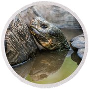 Galapagos Giant Tortoise In Pond Amongst Others Round Beach Towel