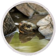 Galapagos Giant Tortoise In Pond Behind Another Round Beach Towel