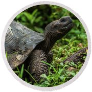 Galapagos Giant Tortoise In Profile In Woods Round Beach Towel