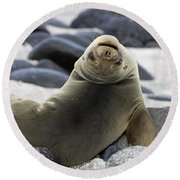 Galapagos Sea Lion Round Beach Towel