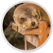 Galapagos Sea Lion Sleeping On Wooden Bench Round Beach Towel