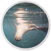 Galapagos Sealion Round Beach Towel