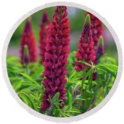 Gallery Red Lupines Round Beach Towel