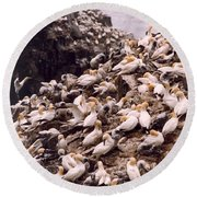Gannet Cliffs Round Beach Towel