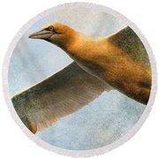 Gannet In Flight Round Beach Towel