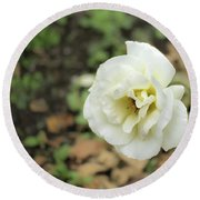 Garden Party Hybrid Tea Rose, White Rose Originally Produced By Round Beach Towel