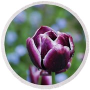 Garden Tulip With Rain Drops On A Spring Day Round Beach Towel