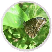 Garden With A Blue Morpho Butterfly With Wings Closed Round Beach Towel