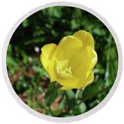 Garden With Beautiful Flowering Yellow Tulip In Bloom Round Beach Towel