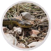 Garter Snake On The Trail In The Pike National Forest Of Colorad Round Beach Towel
