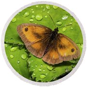 Gatekeeper Butterfly After The Rain. Round Beach Towel