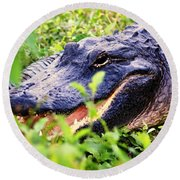 Gator 1 Round Beach Towel